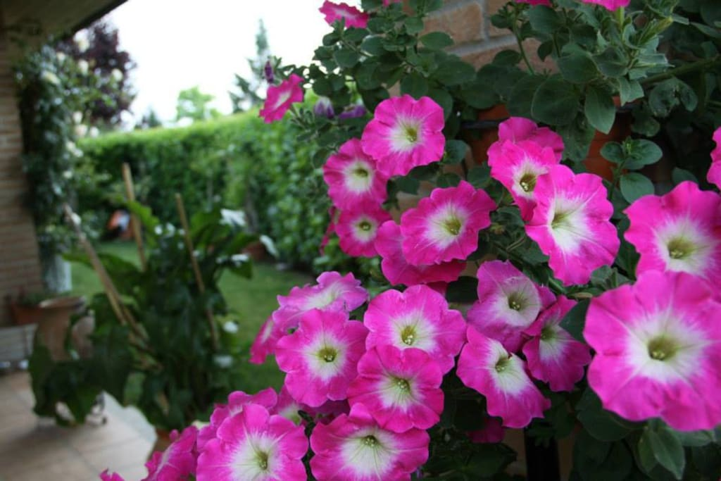 Nei mesi caldi il giardino è pieno di fiori