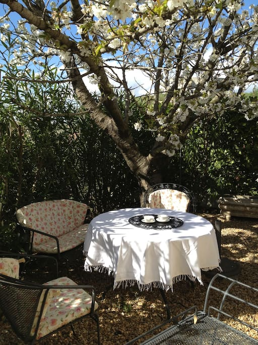 dining space under cherry tree