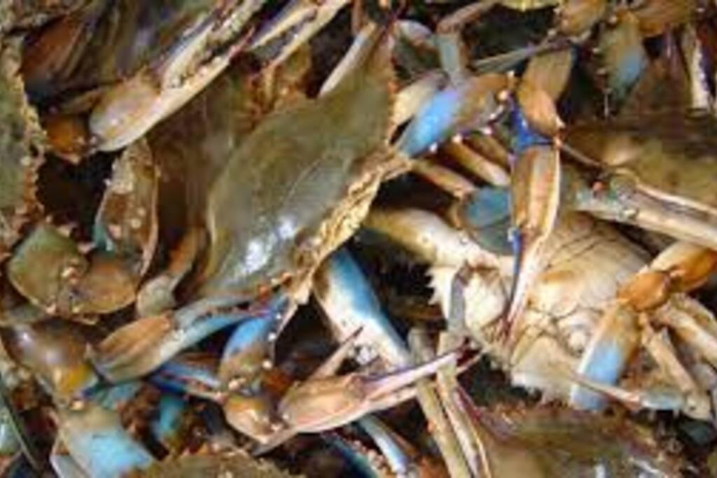 Crabs!!!