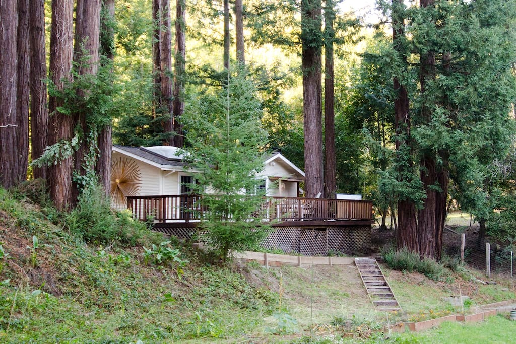 the cottage nestled in the redwoods