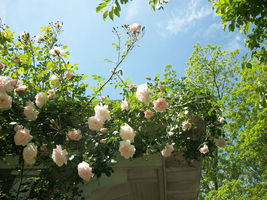 Mid to late May is best time to see the amazing roses on our front porch. They stop traffic.