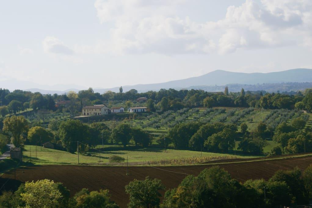 Vista della tenuta