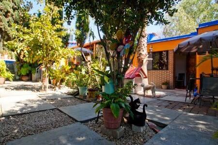 A green oasis in downtown Oaxaca - Oaxaca - House