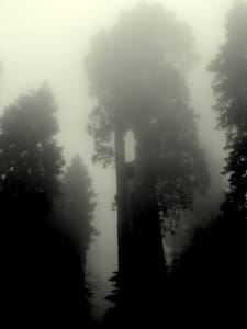 ~ The Giant Sequoias' Forest ~      - Bed & Breakfast