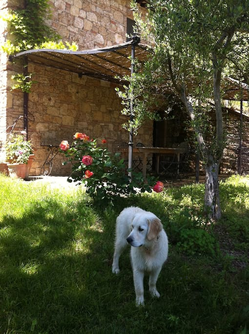 Floppy dog and pergola outside your door