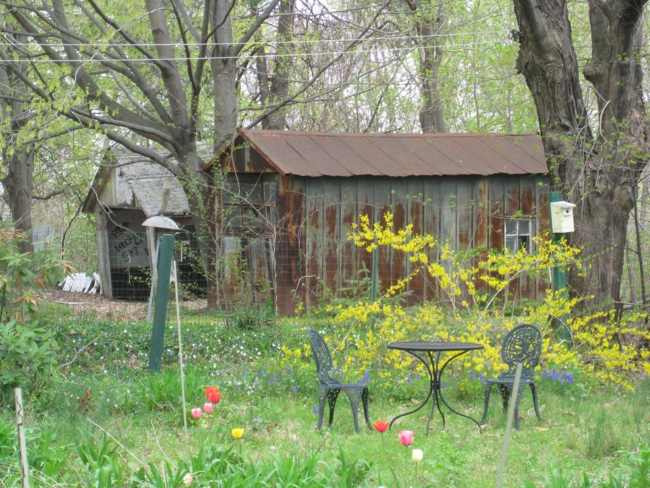 Toward the back of the garden at Clover Nook, early spring