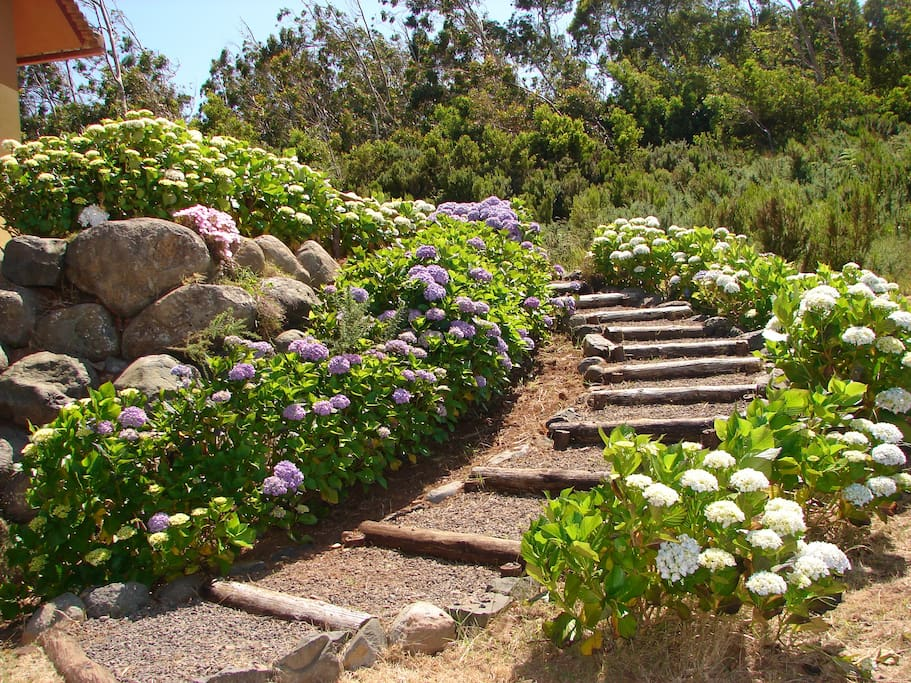 Blooming stairs...
