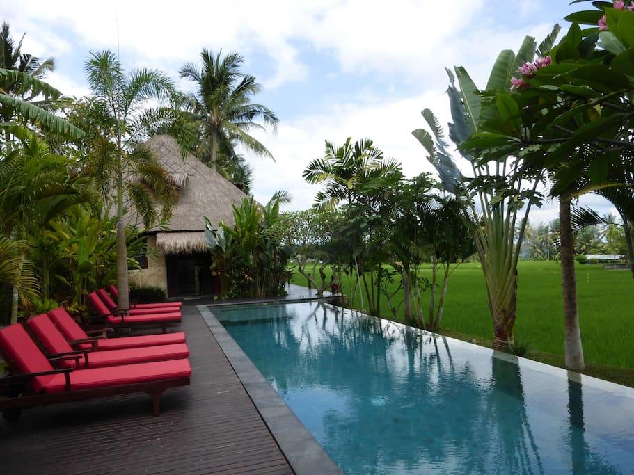 Swim, dip, relax