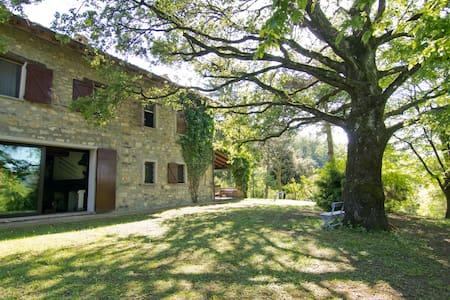 Villa Matilde di Canossa  - Villa