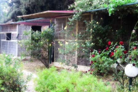Sukah BaGalil Rosemary Hut
