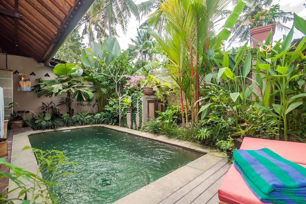 tropical garden and pool
