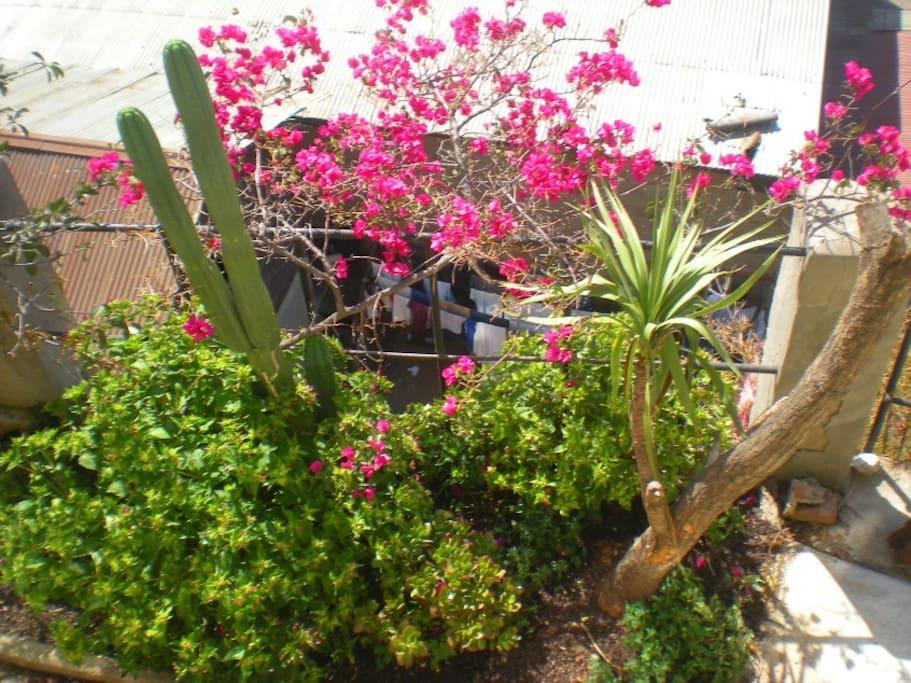 Little garden in the terrace/balcony.
