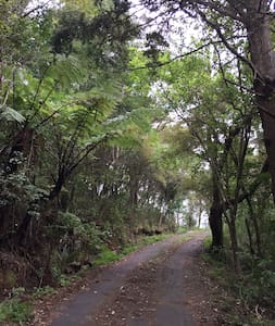 Forest Hideaway - Step to the Beach - Orewa