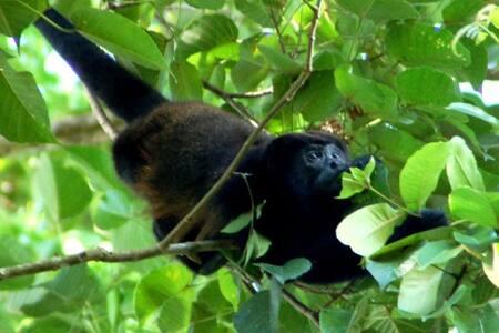 Howler Monkey Jungle Hideaway! - Dominical Costa Rica - Cabin