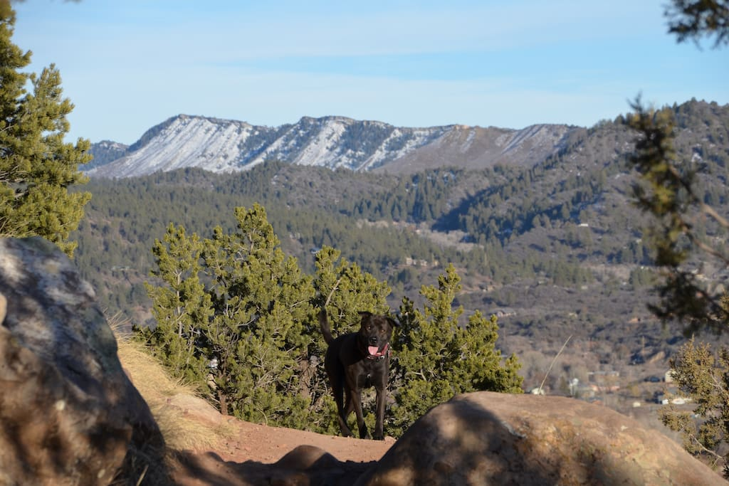 Our dog, Alpe taking advantage of the trails above the house