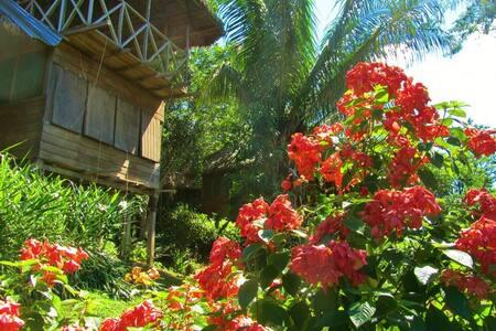 Eco House en la Selva