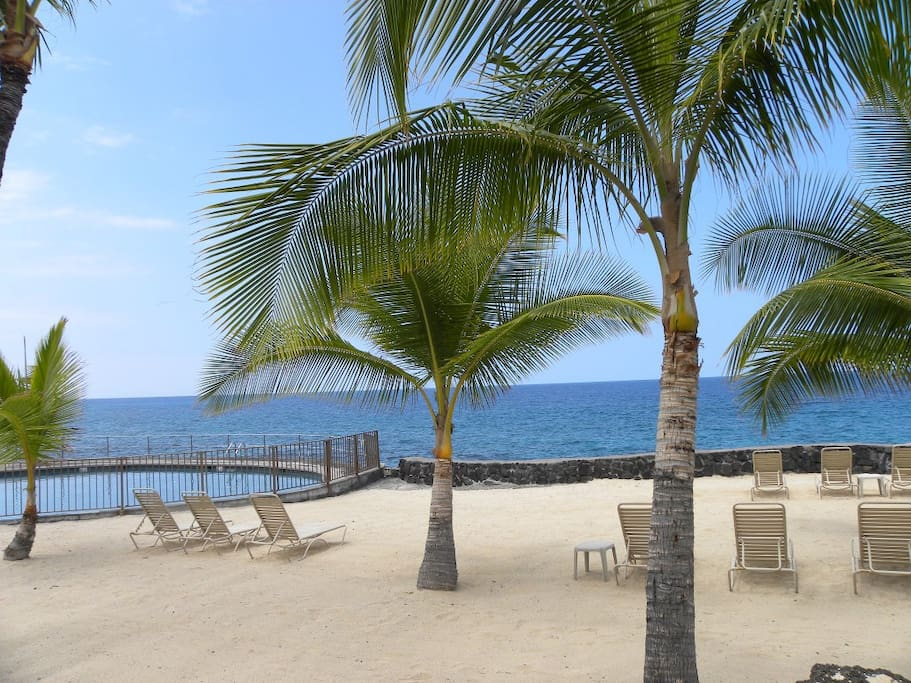 Oceanfront pool and beach for sunbathing or relaxing in the shade of a palm tree
