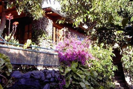 Natursteinhäuschen unter Palmen - Maison