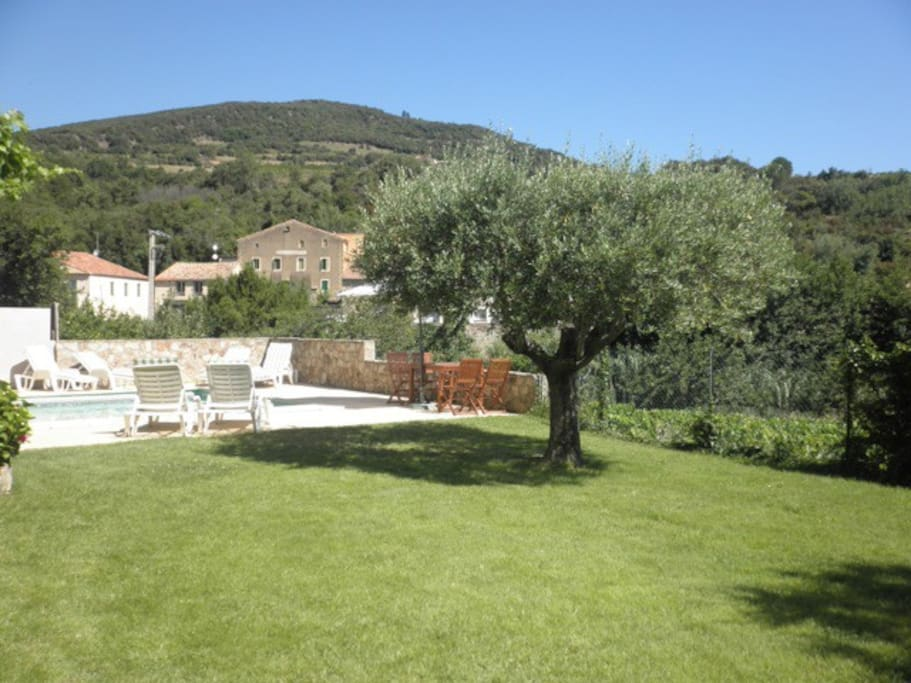 Garden with Mediterranean vegetation, olive trees and a lawn.