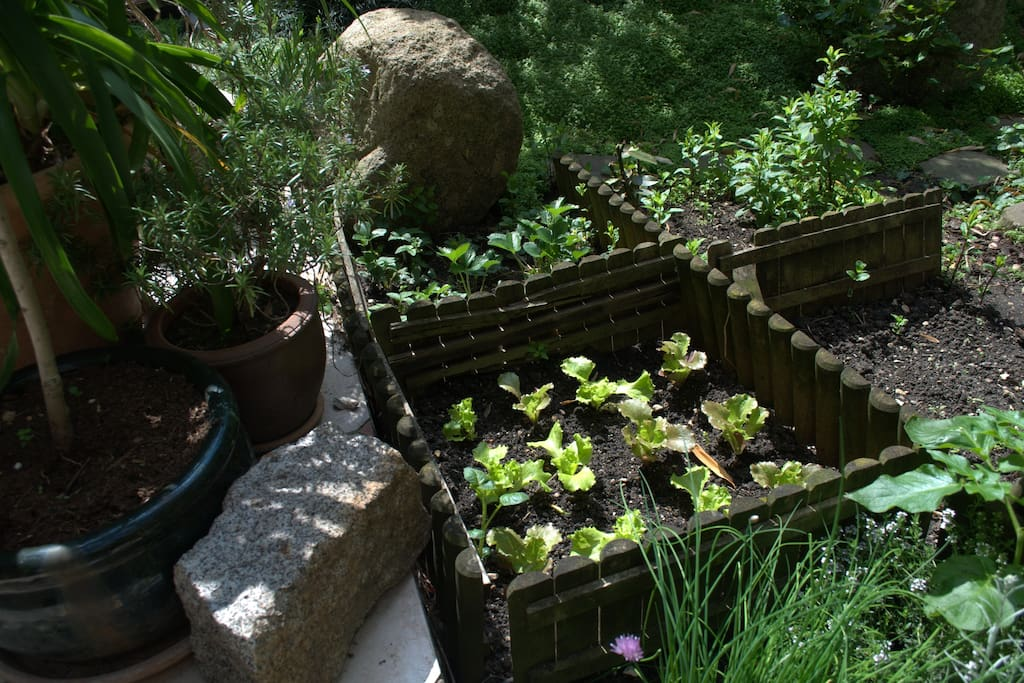 small vegetable patch