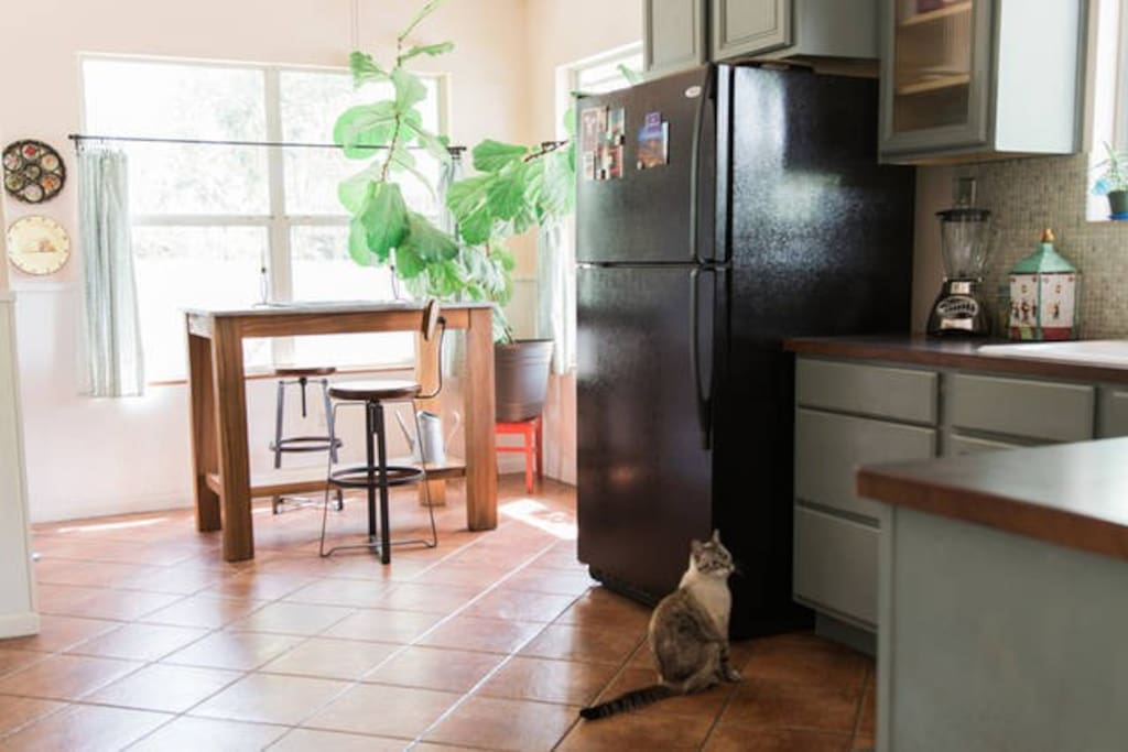 Kitchen (with Kiki the cat).  A light breakfast is set out on the kitchen island for you.
