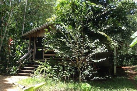 Moonracer Farm: Hear the Howlers Overhead 1 - San Ignacio - Cabaña