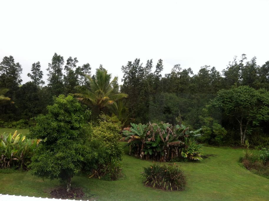 This is a tropical rain forest!