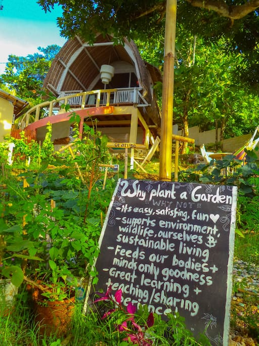 Lovingly maintained permaculture garden