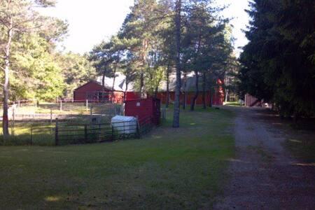 Country House - Ludington - House