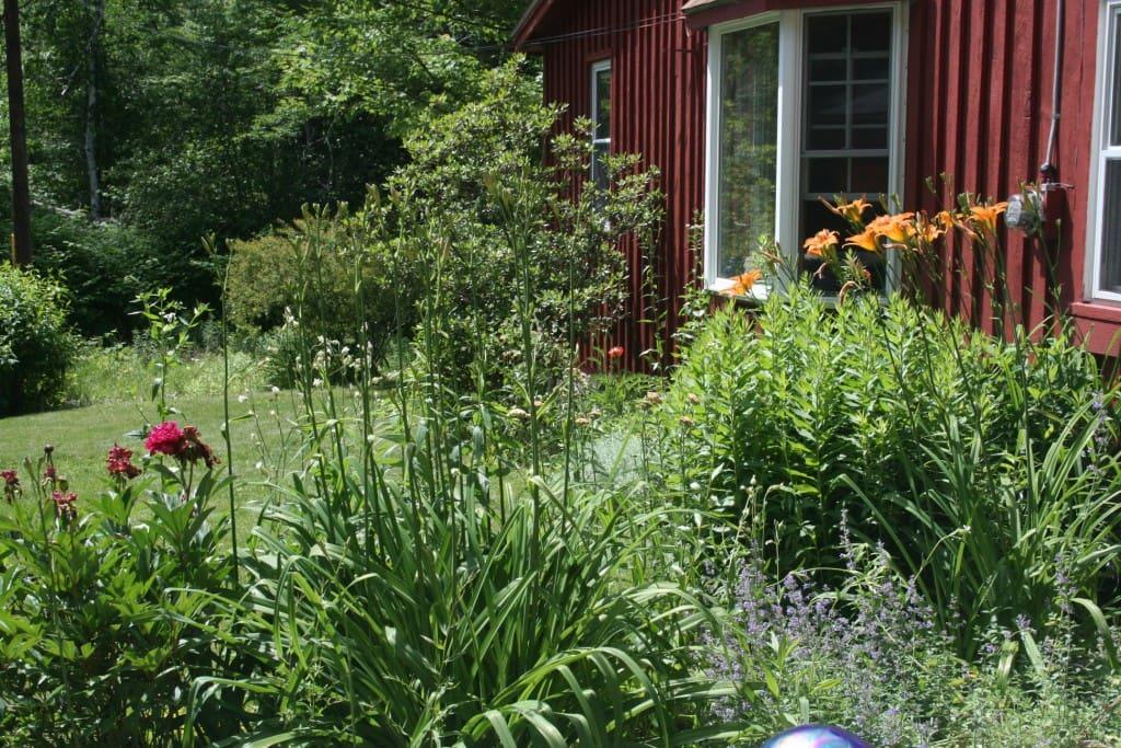 Garden in full bloom!