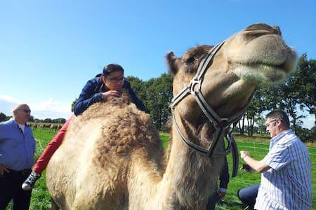 Slapen bij een kamelen B&B! - Berlicum