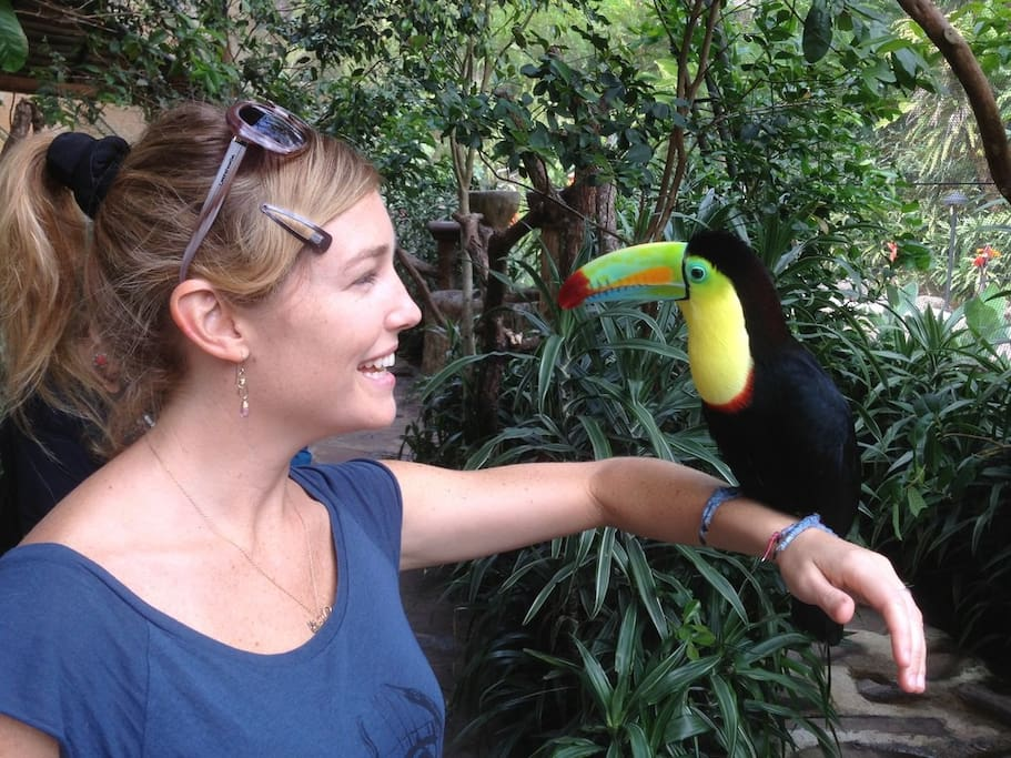 Hold Toucans at La Paz Waterfall Gardens