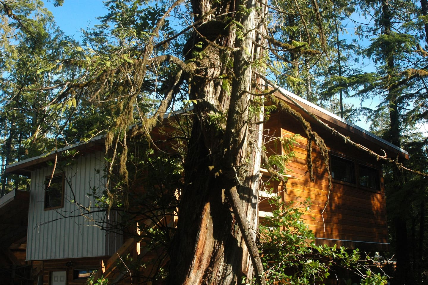 Welcome to the modern studio suite in the trees: front entrance