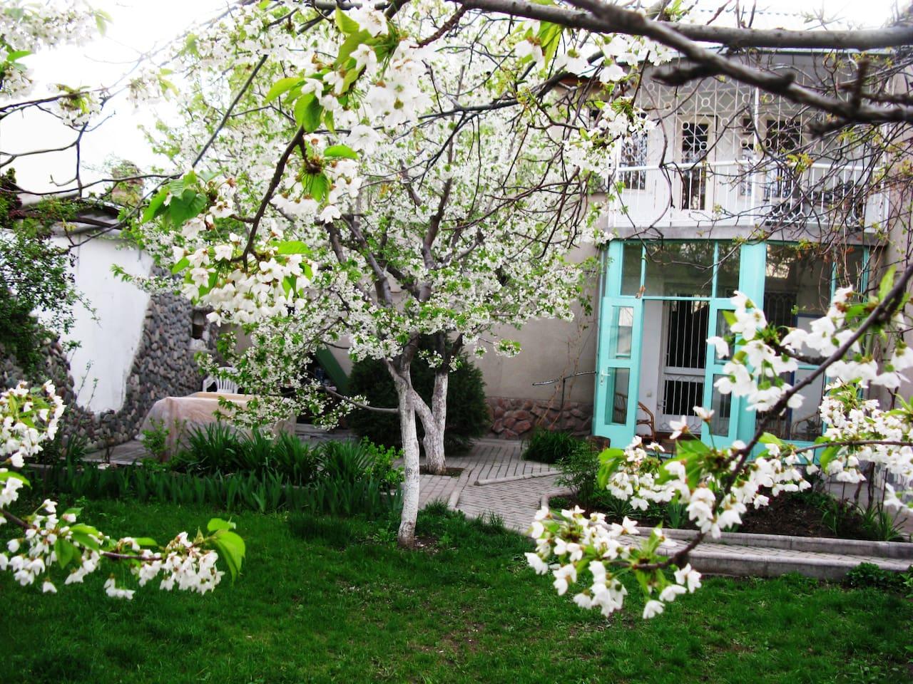 Back garden in Spring Bloom