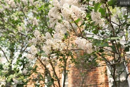 Berkley Flowers Entire Home - Ház
