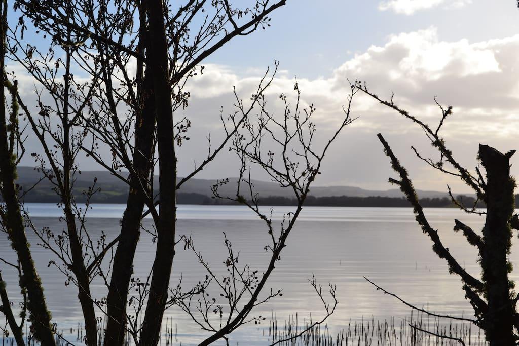 Lough Arrow through the tree's
