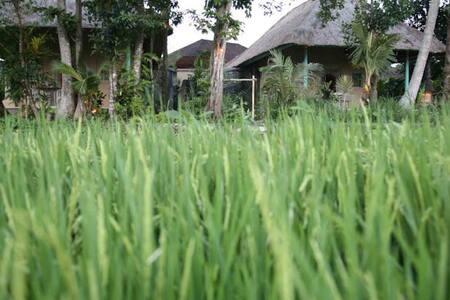 Balinese Rice Terrace Bungalow  - Tabanan - Villa