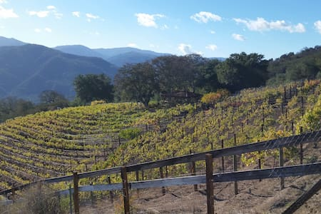 Dakota Ranch Vineyard - Carmel Valley - Dom