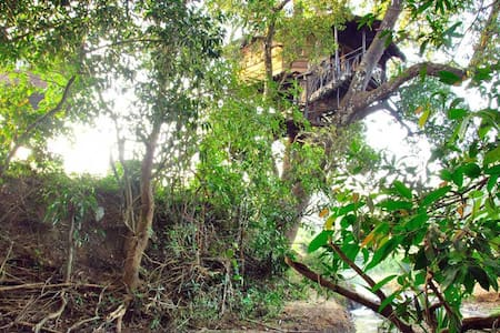 Dandeli Mist - Mango Treehouse
