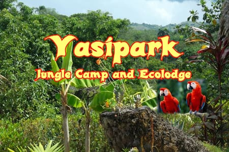 Yasipark - Nature Camp and Ecolodge - C 2 - Hut