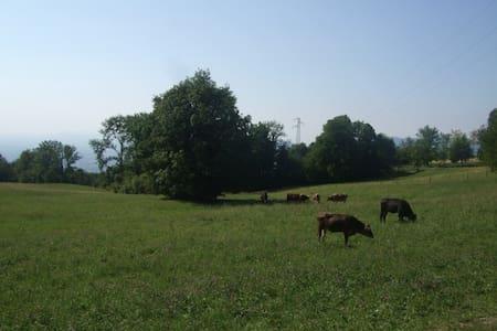 Tra natura animali e torrenti - House