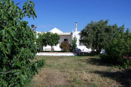 Bungalow in big olive field,3 Guest - House