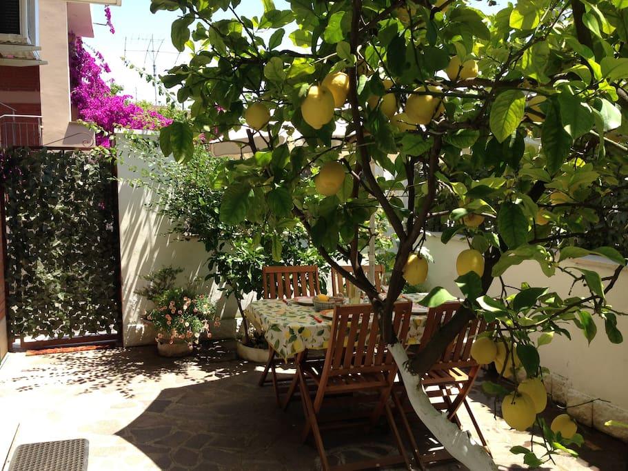 ..under the lemon tree!