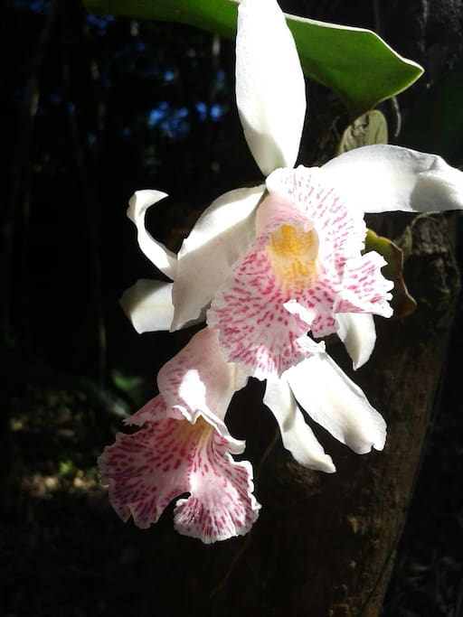 Natural orchid.