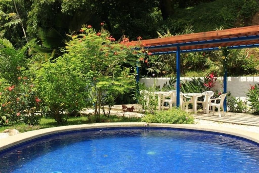 Swimming pool with beautiful well maintained tropical gardens