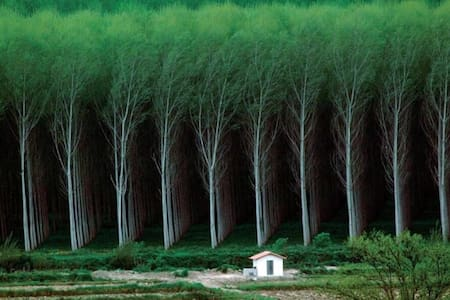 TEST Tree tunnel 3D printed forest Hut - Pis