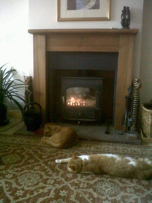 cats enjoying the warmth of the fire in the lounge