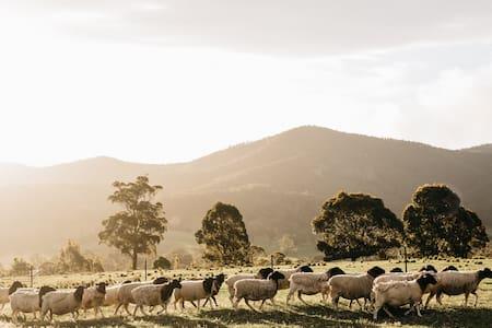 Tranquil rural setting - Moruya