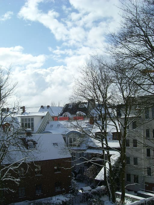View from the back window in Winter