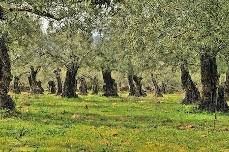 ✿Galilee Olive Grove Getaway - Talo